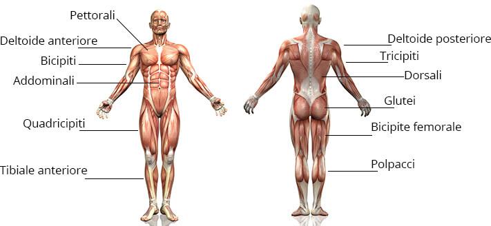 muscoli ellittica